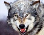 Общество хищников и их вкусовые предпочтения